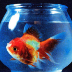 Album Review: Big Fish Theory (Vince Staples)