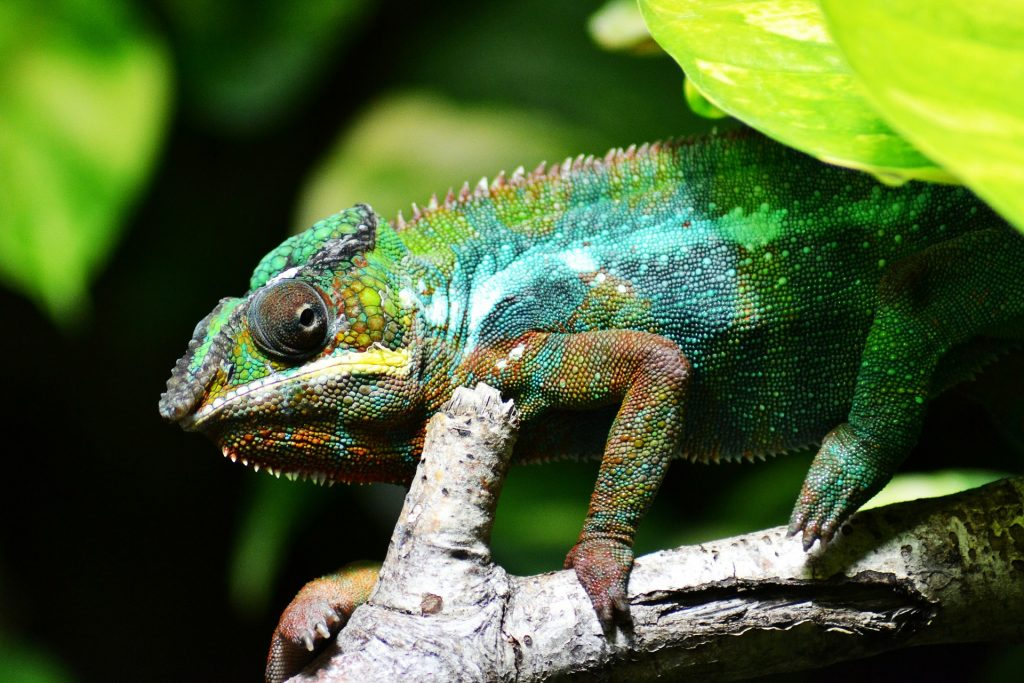 Confessions of a Relationship Chameleon